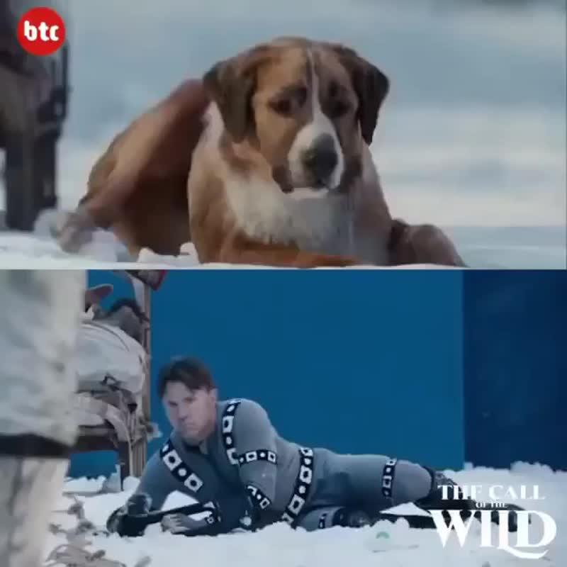 Как на самом деле снимали «собак» в фильме «Зов предков»