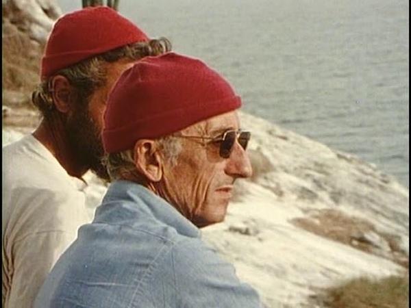 Морские птицы острова Изабелла 1975