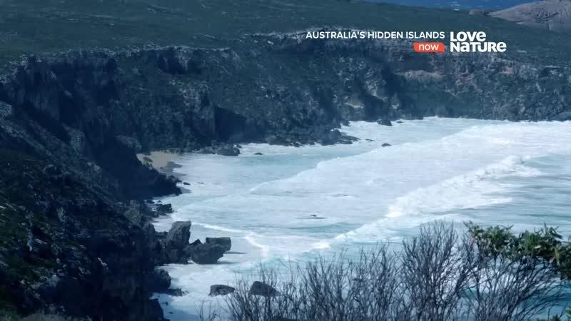 Avustralyanın Gizli Adaları 2 Kanguru Adası Kangaroo Island