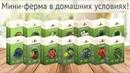 Домашняя ферма. Домашняя Мини Ферма огурцы, помидоры, редис, укроп, петрушка, годжи, голубика...