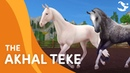 The Updated Akhal-Teke Star Stable Trailers