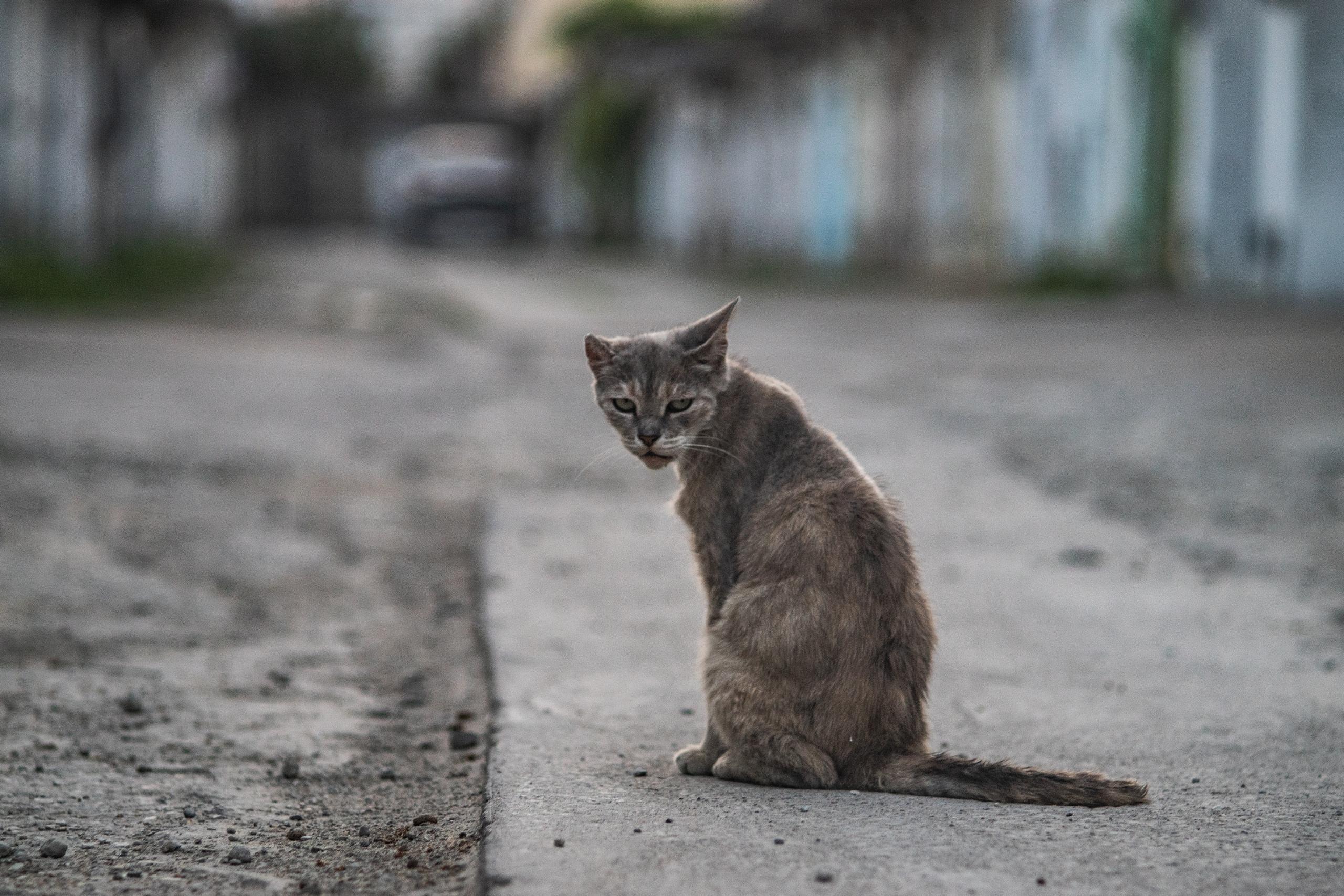 Гаражная новороссийская кошка - Фото