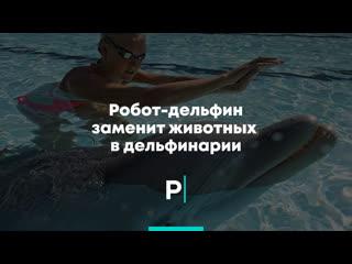 Робот-дельфин заменит животных в дельфинарии