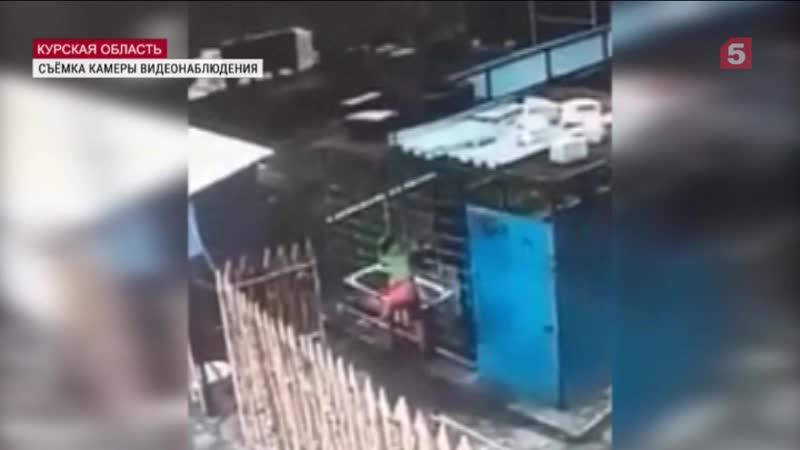Видео момента нападения медведя наработницу питомника