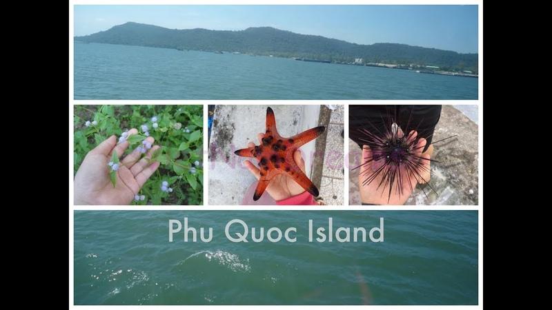 Phu Quoc Island experience Du lịch trải nghiệm đảo Phú Quốc Việt Nam