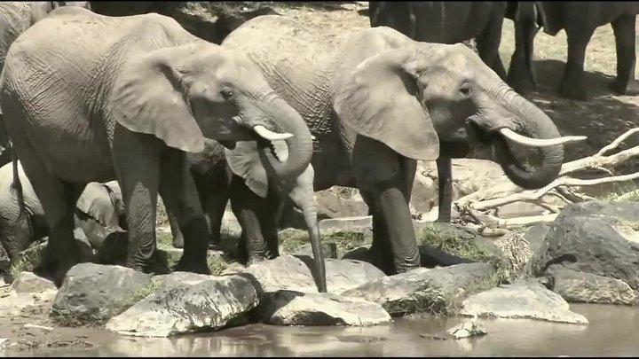 Армагеддон животных Будущее вымирание 8 фильм HD Документальный фильм Динозавры от А до Я