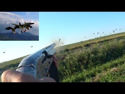 Охота на утку КАК С ПУЛЕМЕТА Duck hunting AS with a machine GUN