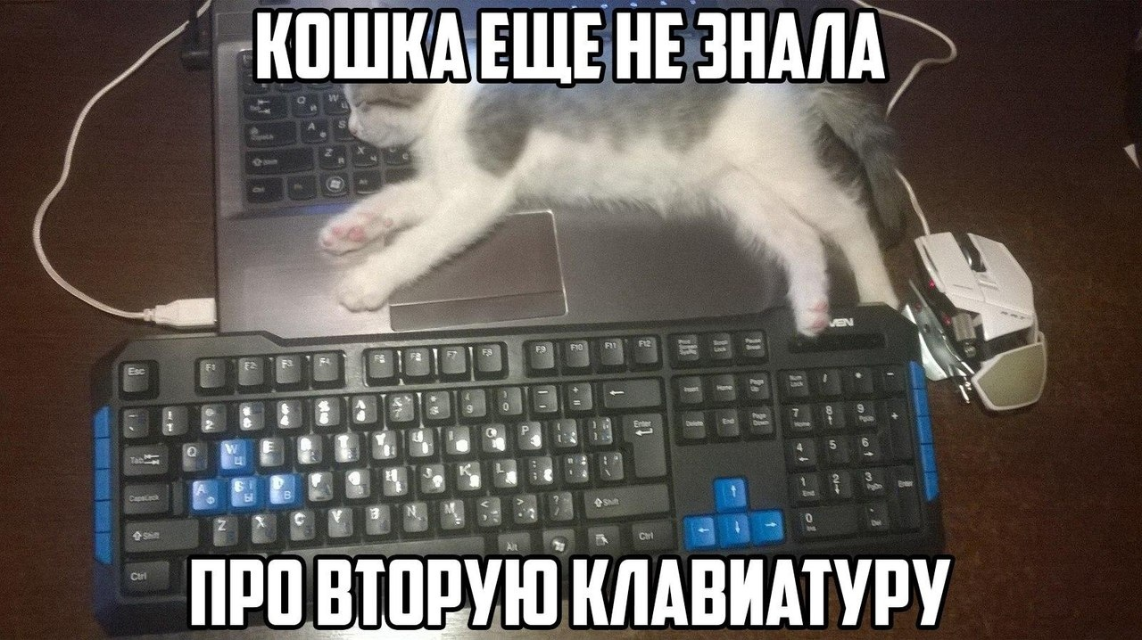 https://sun1-19.userapi.com/c635107/v635107627/2881/kurxj2EtOBA.jpg