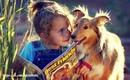 Если бы только люди могли любить как собаки, мир стал бы раем(Джеймс Дуглас)