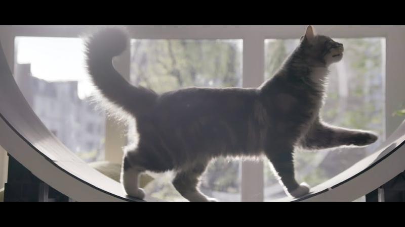 PERFECT FIT™ Как привить кошке любовь к играм и активному образу жизни дома
