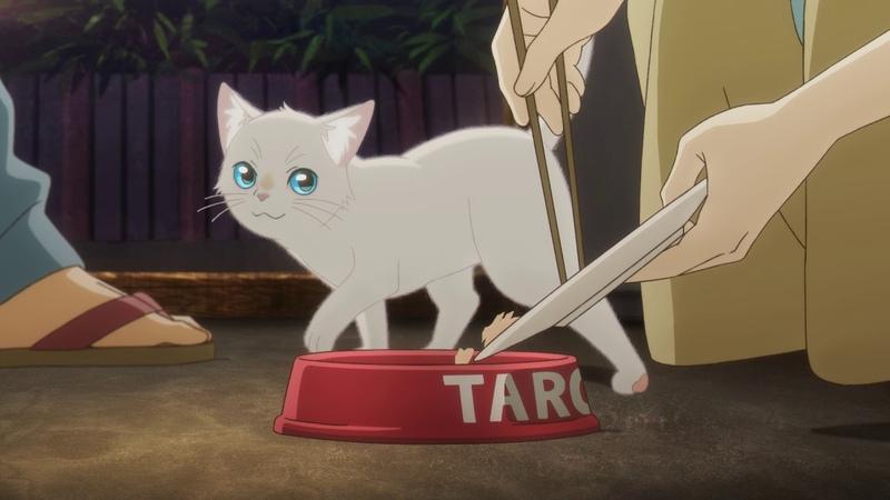 猫世界へようこそ!編PV『泣きたい私は猫をかぶる』 6月18日Netflixにて配信スタート!