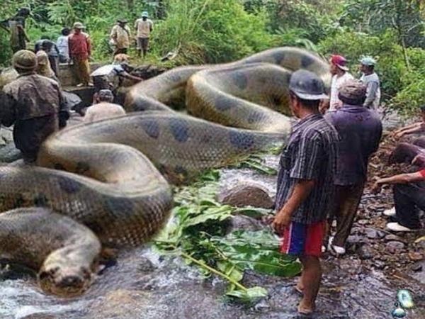 Животный мир Амазонии Тропический рай Поразительное разнообразие Бразилии Флора Фауна Самые опасные