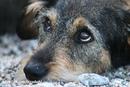 Вы смотрели бездомной собаке в глаза?