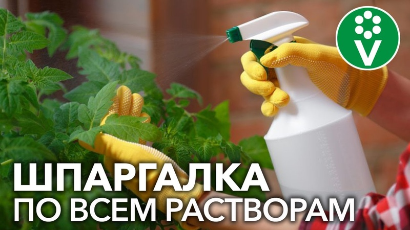 Как долго хранятся растворы препаратов Янтарная кислота, дрожжи, сенная палочка, препараты меди...