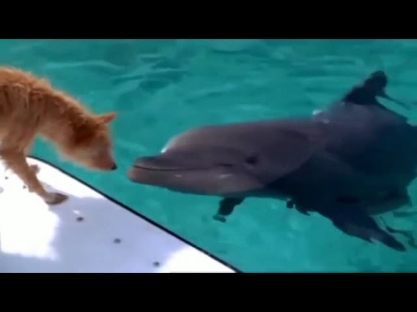 Demis Roussos Follow Me Dolphin and Dog Let's be Friends