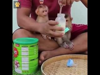 Дети они такие дети, даже, если они обезьянки