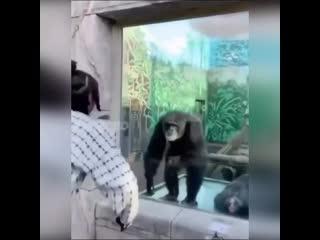 Ну и кто тут обезьяна