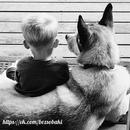 Собаки,храни их Бог,считают,что человек – существо слабое, беззащитное…