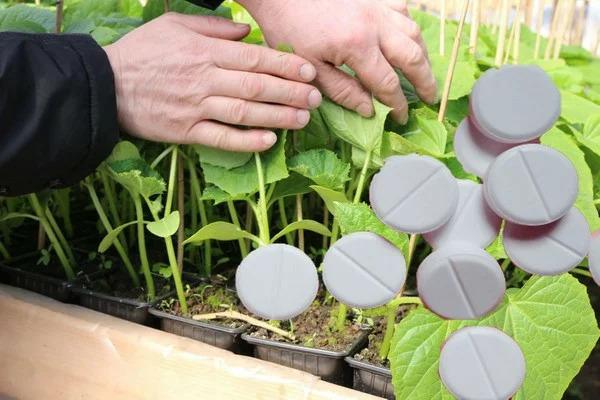 Какое дешёвое аптечное средство может с лёгкостью заменить азотное удобрение для растений