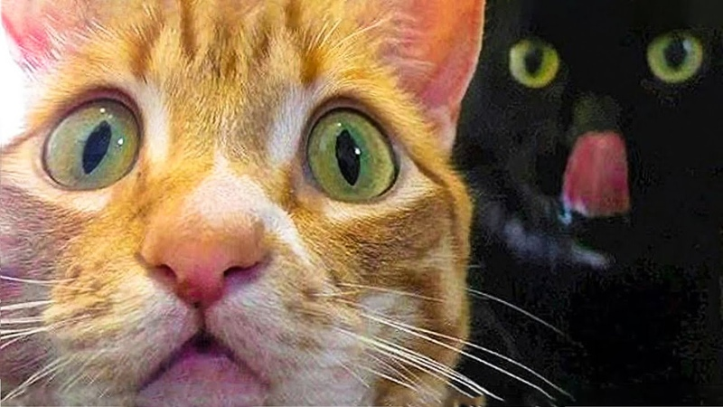 🤣 Funniest 😻Cats And 🐶 Dogs - Try Not To Laugh - Funny Pet Animals Life 😇