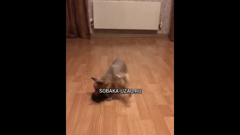 Привет от Мохнатик Кузьминки Играем SOBAKA