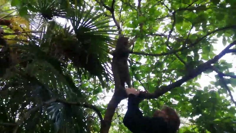Наш Васька нашелся! 2е сут просидел на дереве, испугавшись собак. Сегодня с утра Писк! СНИМИТЕ!)