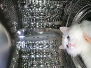 Уникальные кадры полета котика в космос