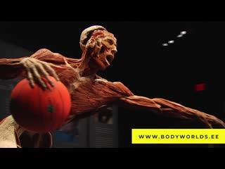 Body Worlds - открыто