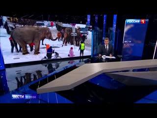 ВЕСТИ в 20:00    Екатеринбургский цирк
