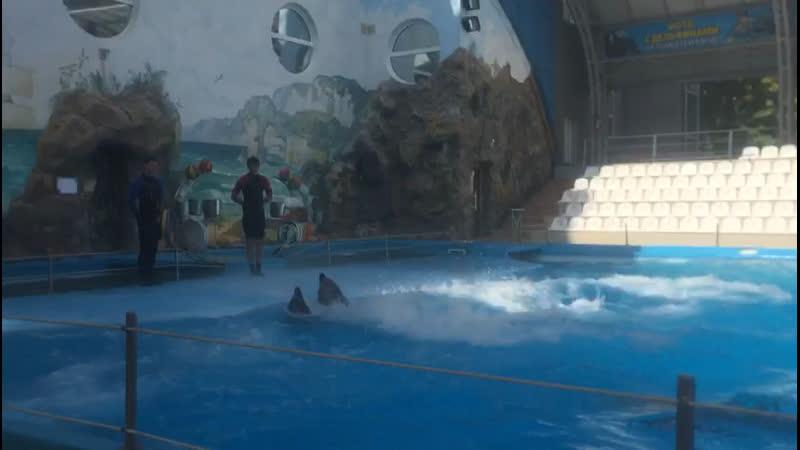 Танец белого кита 😍