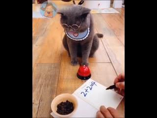 Так вот ты какой, кот ученыи!!