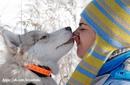 Собачья психология…