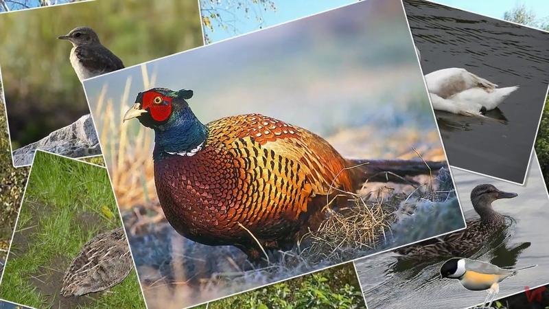 Зимующие и перелётные птицы Донбасса