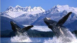 Мир гигантских китов Тайны океана Документальный фильм National Geographic
