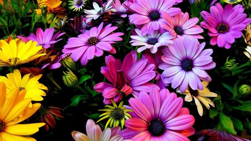 Сборник красивой музыки для души (музыка цветов)