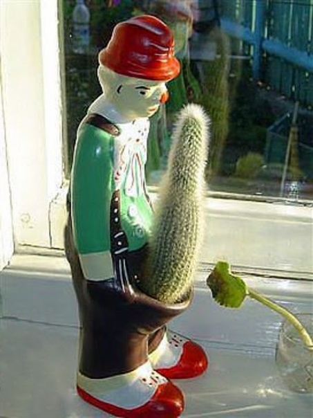Увидела у подруги цветочный горшок, смеюсь не могу...