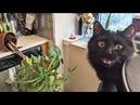 ПРИКОЛЫ С ЖИВОТНЫМИ 😺🐶 Смешные Животные Собаки Смешные Коты Приколы с котами Забавные Животные 84