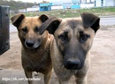 Послание собаки из приюта…