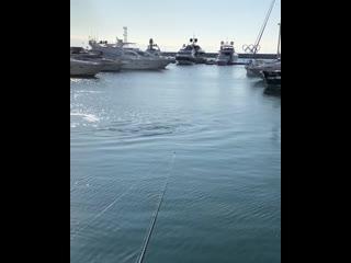 Стая дельфинов ловит рыбу в акватории морского порта Сочи