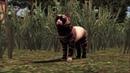 The Sims 3 Machinima . Kitten's father