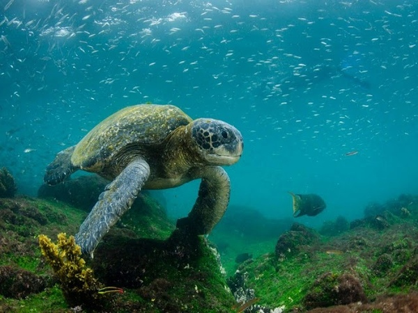 Самые экологически чистые уголки мира