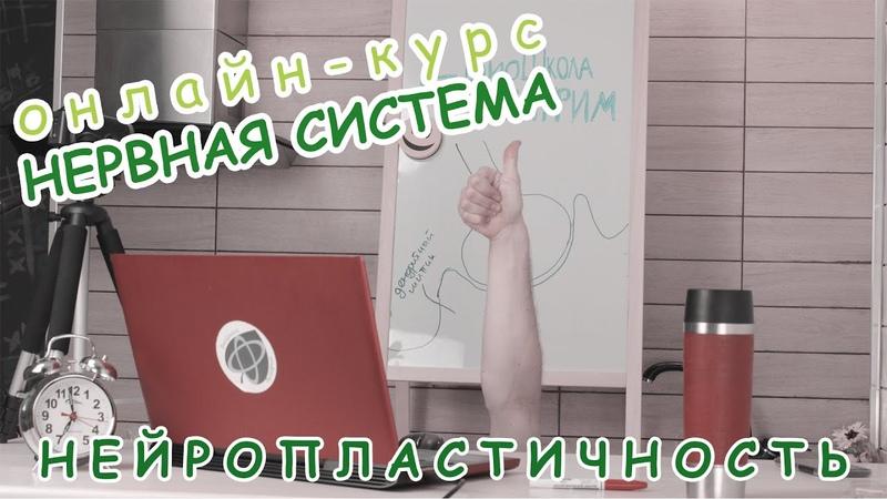 Серия 13 НЕЙРОПЛАСТИЧНОСТЬ БиоШкола Пилигрим Даня Бобровский курс Нервная система