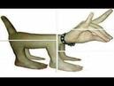 7 Животных Мутантов в Чернобыле, Снятых на Камеру (перезалив) | Sven Co-op