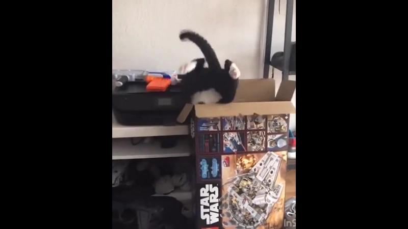 Cat vs. Box
