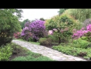 Japanese Garden, Wroclaw, Poland _ Japanischer Garten, Breslau, Polen _ Ogród Japoński, Wrocław