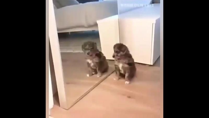 когда утром посмотрел в зеркало
