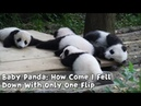 Baby Panda: How Come I Fell Down With Only One Flip | iPanda