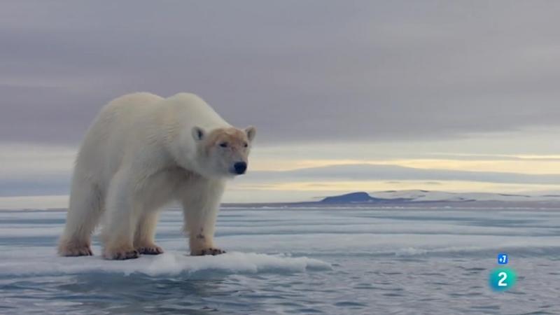 Grandes documentales - La Caza Viviendo con depredadores