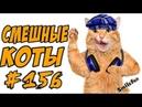 Приколы с котами - Смешные Кошки и Коты 2018 ДО СЛЁЗ - Funny Cats