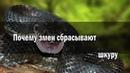 Змеи 🐍 самые умные животные 👍🏻👍🏻👍🏻👍🏻👍🏻👍🏻👍🏻👍🏻👍🏻👍🏻👍🏻👍🏻👍🏻